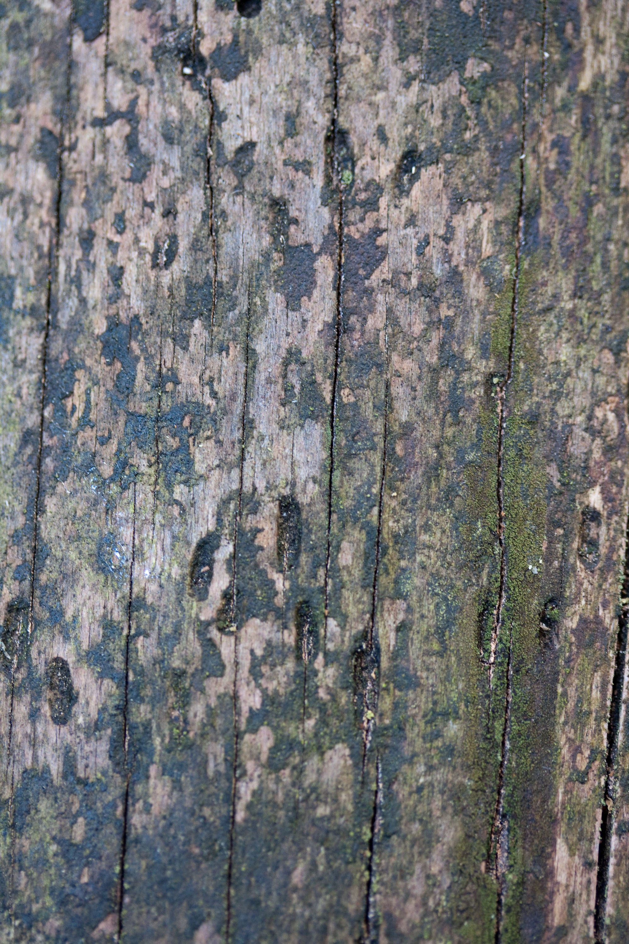 textures/library/2009_forest/IMG_0002.jpg