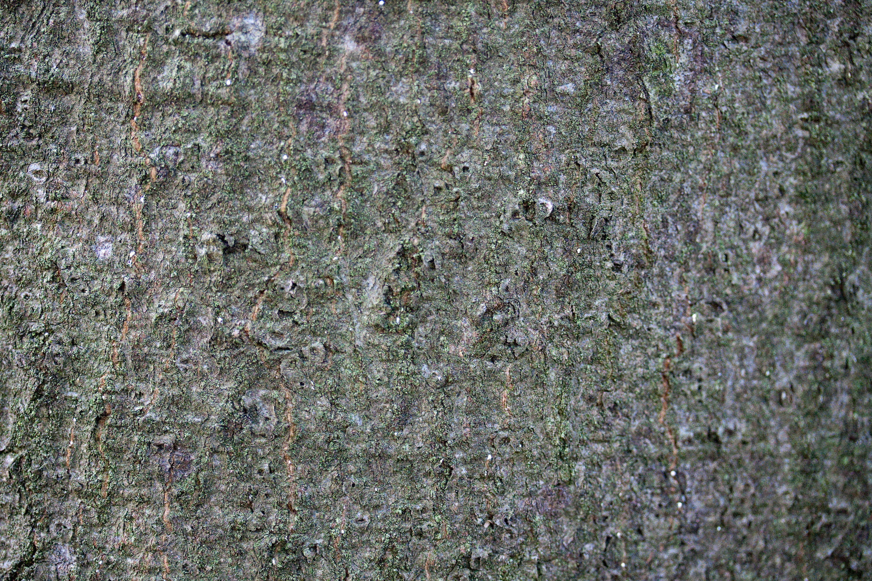 textures/library/2009_forest/IMG_0032.jpg