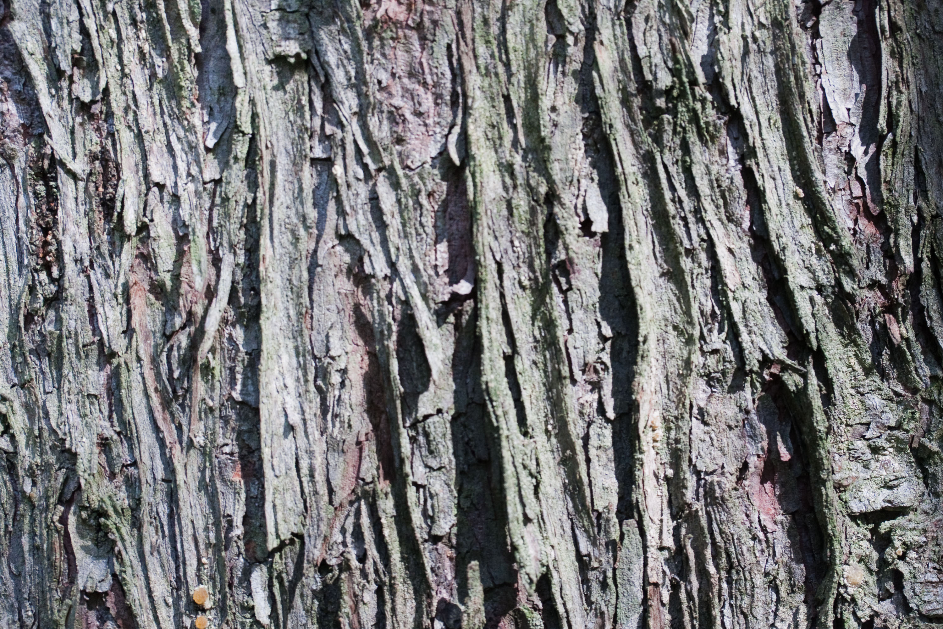 textures/library/2009_forest/IMG_0125.jpg
