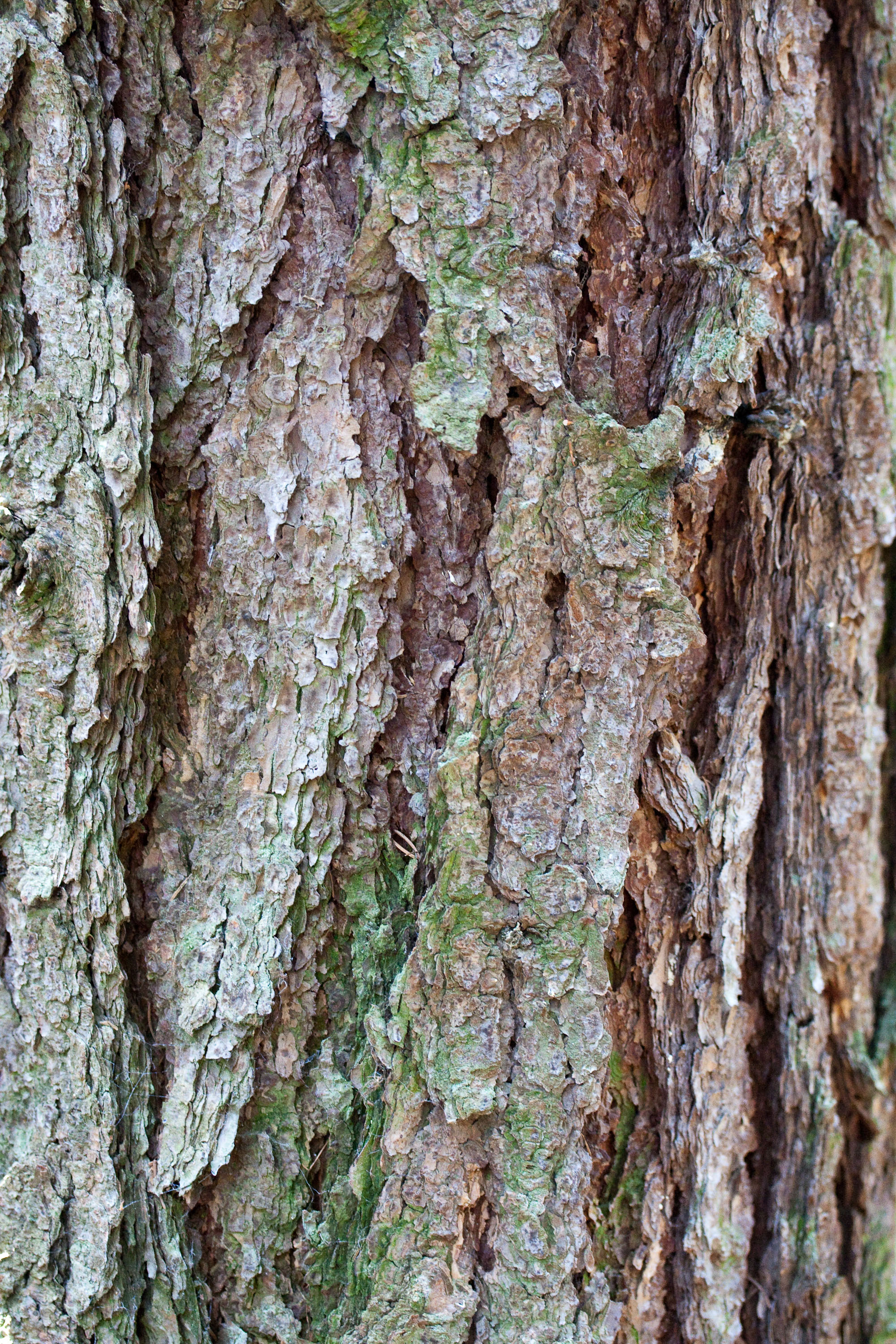 textures/library/2009_forest/IMG_0249.jpg