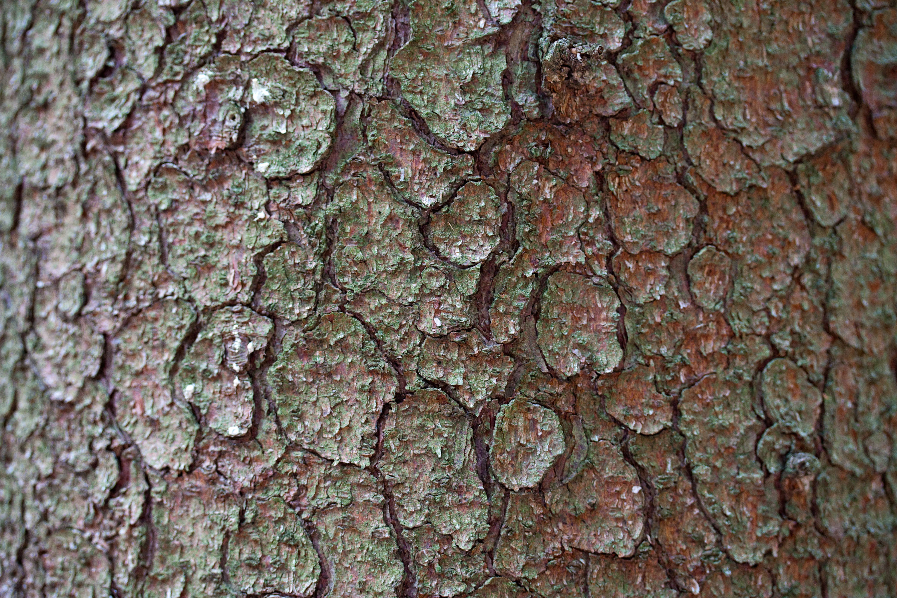 textures/library/2009_forest/IMG_0303.jpg