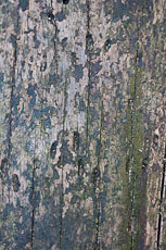 textures/library/2009_forest/S_S_IMG_0002.jpg