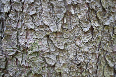 textures/library/2009_forest/S_S_IMG_0004.jpg