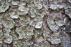 textures/library/2009_forest/S_S_IMG_0029.jpg