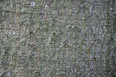 textures/library/2009_forest/S_S_IMG_0032.jpg