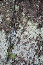 textures/library/2009_forest/S_S_IMG_0038.jpg
