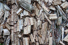 textures/library/2009_forest/S_S_IMG_0078.jpg