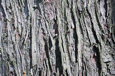textures/library/2009_forest/S_S_IMG_0125.jpg