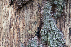 textures/library/2009_forest/S_S_IMG_0130.jpg