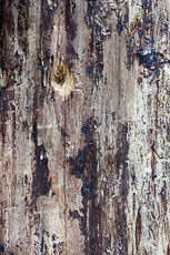 textures/library/2009_forest/S_S_IMG_0134.jpg