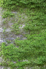 textures/library/2009_forest/S_S_IMG_0177.jpg