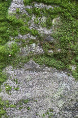 textures/library/2009_forest/S_S_IMG_0183.jpg