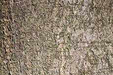 textures/library/2009_forest/S_S_IMG_0195.jpg