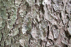 textures/library/2009_forest/S_S_IMG_0234.jpg