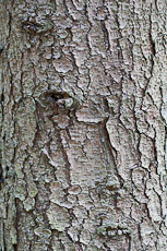 textures/library/2009_forest/S_S_IMG_0240.jpg