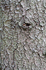 textures/library/2009_forest/S_S_IMG_0243.jpg