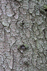 textures/library/2009_forest/S_S_IMG_0246.jpg