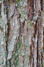 textures/library/2009_forest/S_S_IMG_0249.jpg