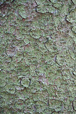 textures/library/2009_forest/S_S_IMG_0270.jpg