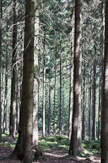 textures/library/2009_forest/S_S_IMG_0279.jpg