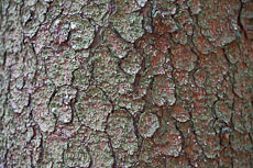 textures/library/2009_forest/S_S_IMG_0303.jpg