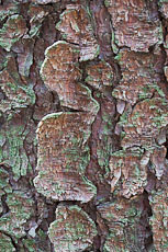 textures/library/2009_forest/S_S_IMG_0342.jpg