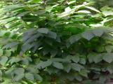 textures/library/nature/S_S_Leafy2.jpg