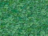 textures/library/nature/S_S_clover1.jpg