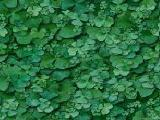 textures/library/nature/S_S_clover2.jpg