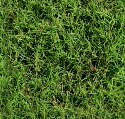 textures/library/organic/Grassy_t.jpg
