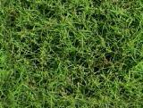 textures/library/organic/S_S_Grassy_t.jpg