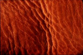 textures/library/skinandfur/leather1.jpg