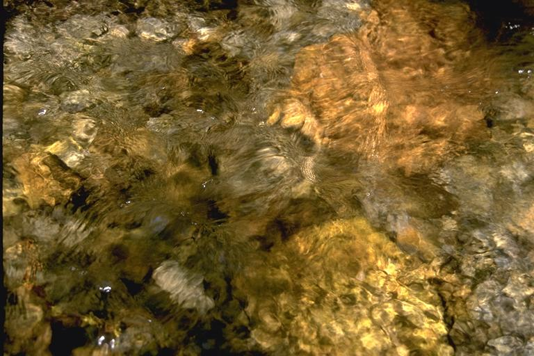 textures/library/water/IMG0061.jpg