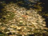 textures/library/water/S_S_IMG0062.jpg