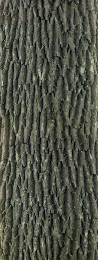 textures/library/wood/Bark1.jpg