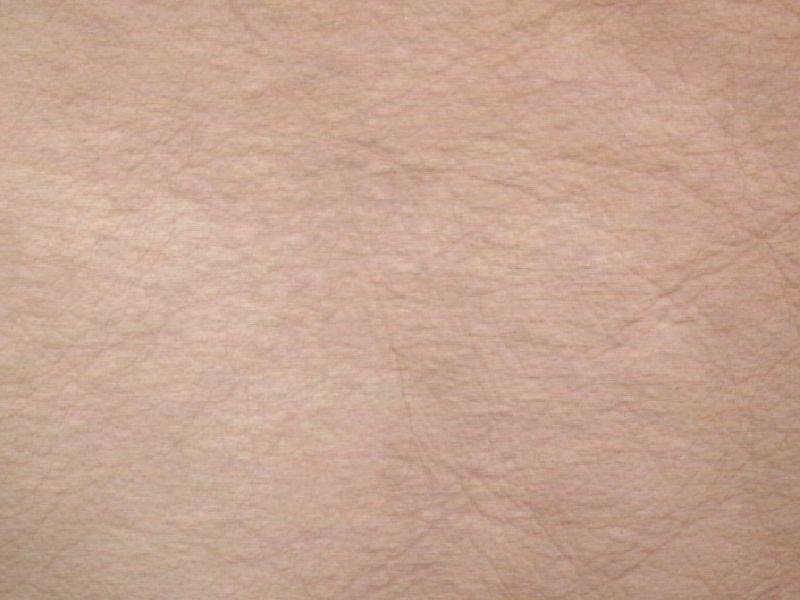 Human Skin Textures | www.pixshark.com - Images Galleries ...